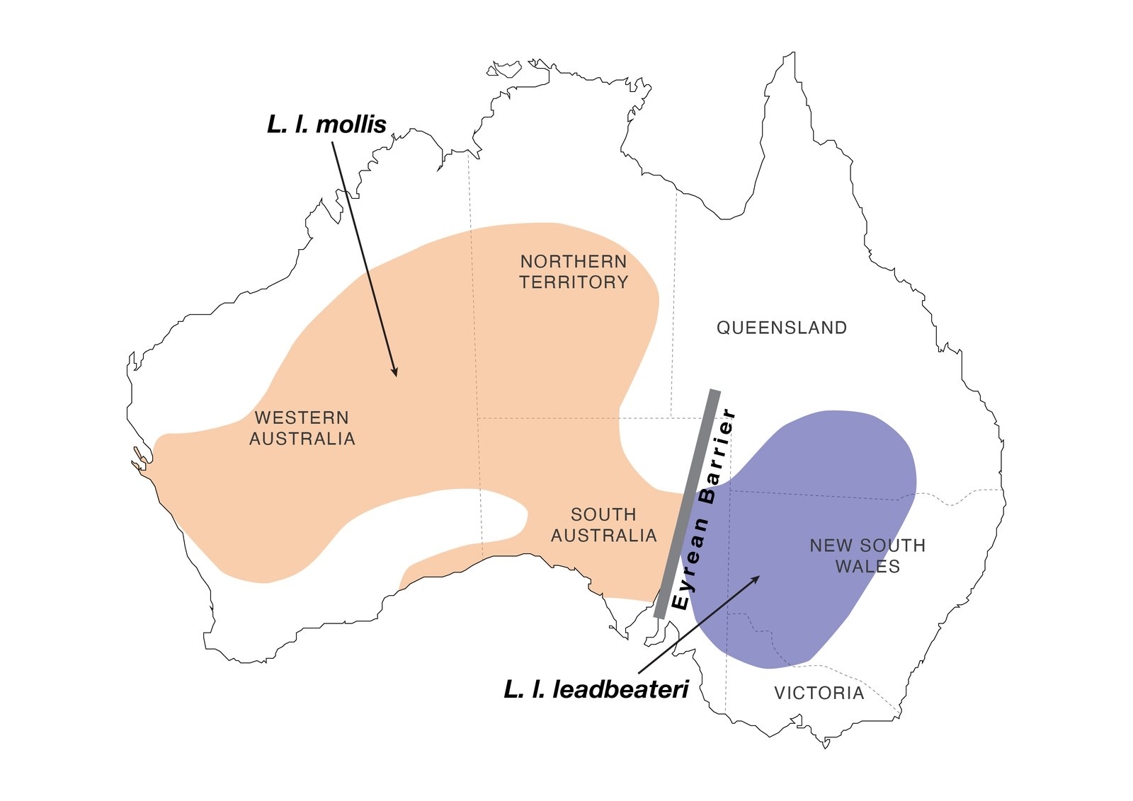 The distribution of the two pink cockatoo subspecies. This Figure is adapted from Figure 1A in the associated paper (i.e. Ewart et al., 2021) using Adobe Illustrator.