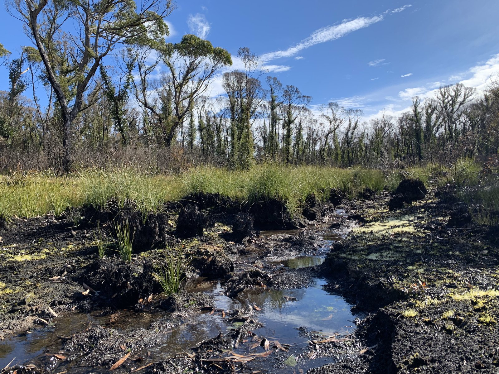 Stream in areas burnt in 2019/20 fires