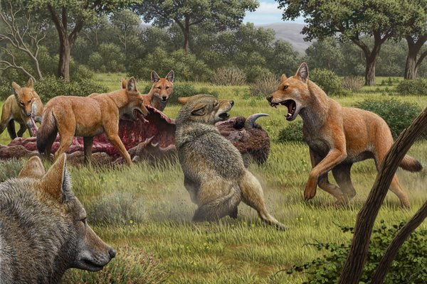 Pack of dire wolves (Canis dirus)
