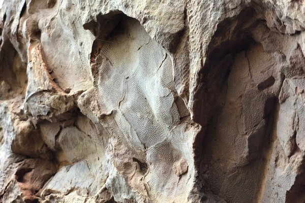 Canowindra Fossils photogrammetry and relocation