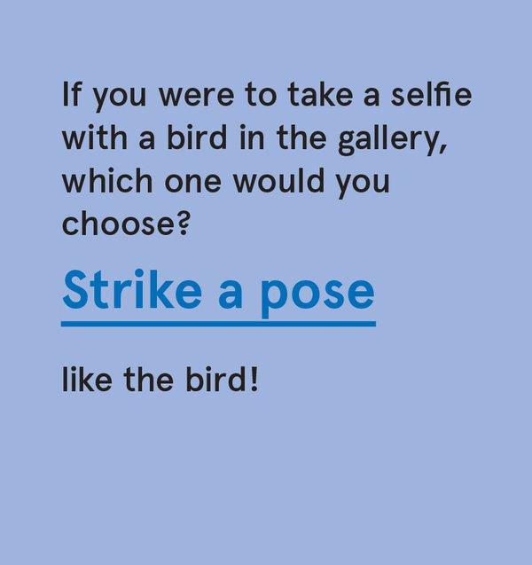 CS_Bird - Card 10