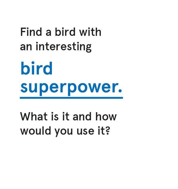 CS_Bird - Card 3