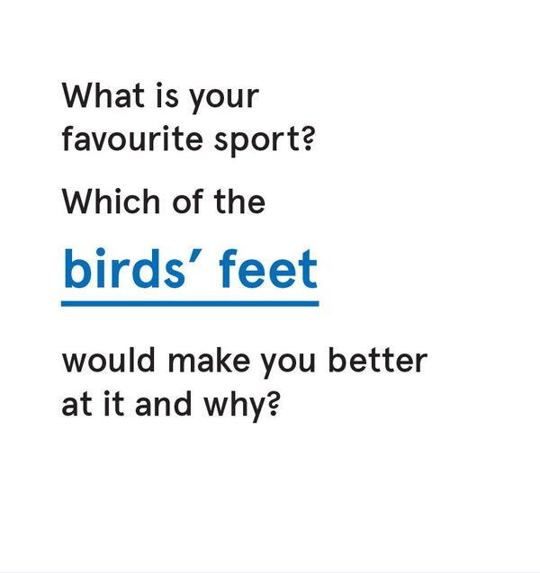 CS_Bird - Card 5