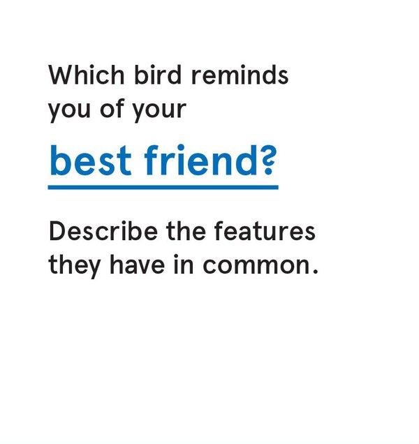 CS_Bird - Card 7