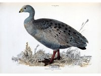 Illustrations of ornithology / by Sir William Jardine and Pridea