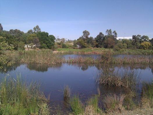 Chullora wetlands