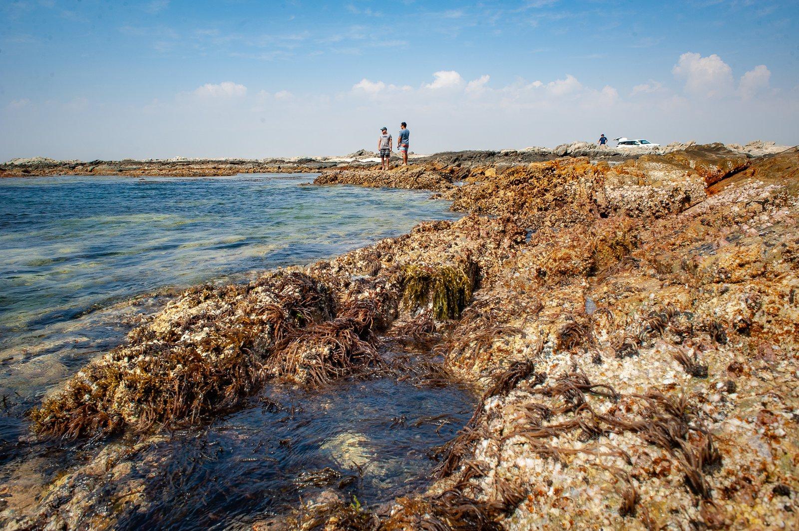 Coral reef survey site, Mirbat, Oman.