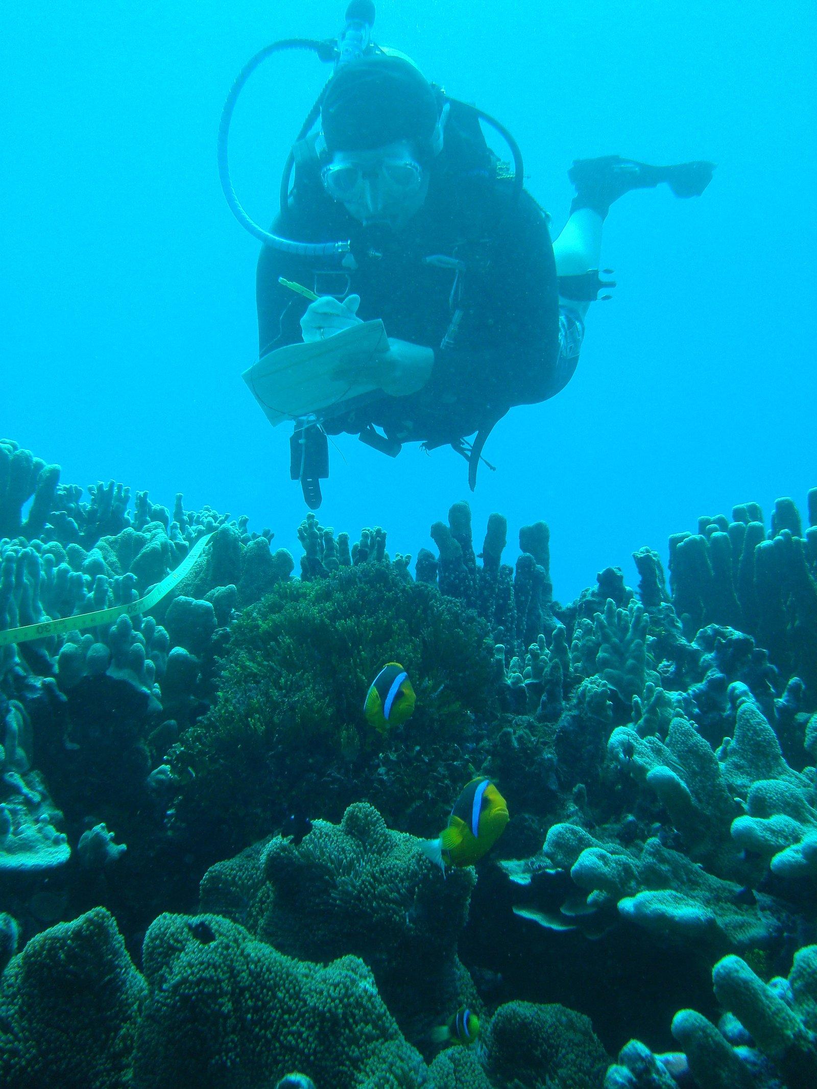 Corals of Kosrae