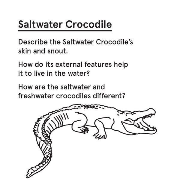 ED_SurvAus_P - Crocodile
