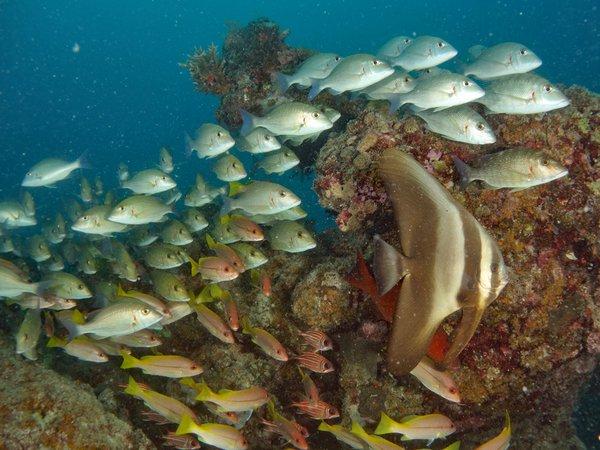 Underwater life at Lizard Island, 2018