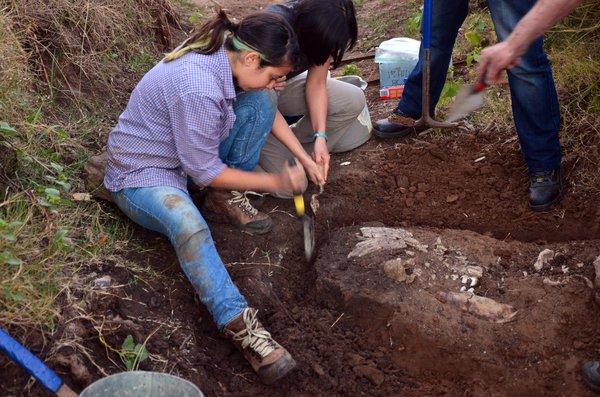 Diprotodon excavation Tambar Springs