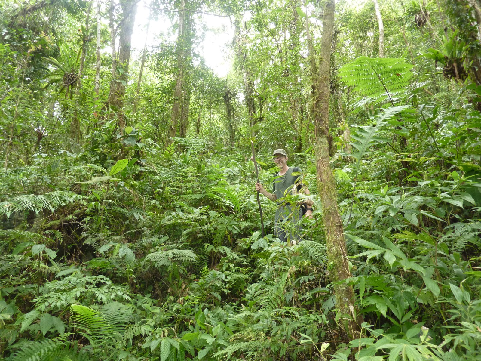 Dr Andrew Mitchell trekking through the forest, Malaita.