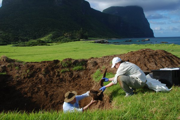 Dr Mark Eldridge and Dr Anja Divljan exhuming a Dense-beaked Whale skeleton