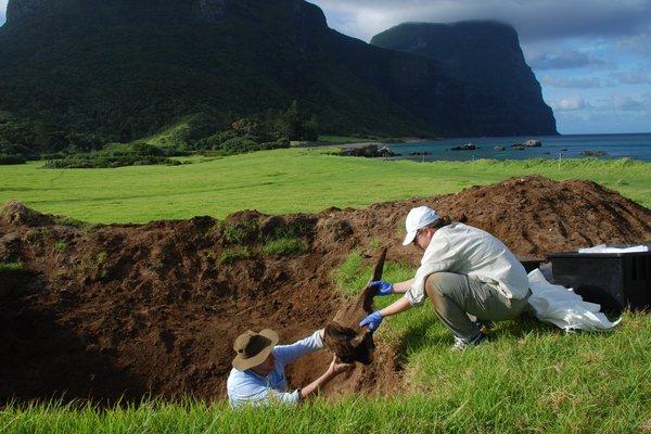 Dr Mark Eldridge and Dr Anja Divljan exhuming a Dense-beaked Whale skeleton