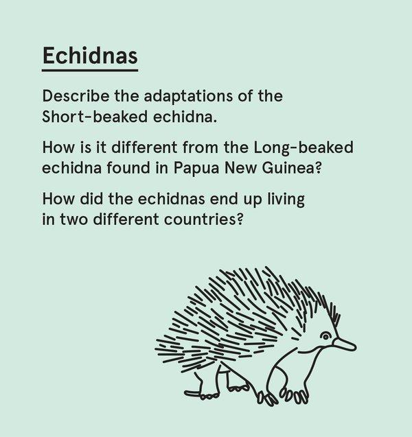 ED_WP_S - Echidna