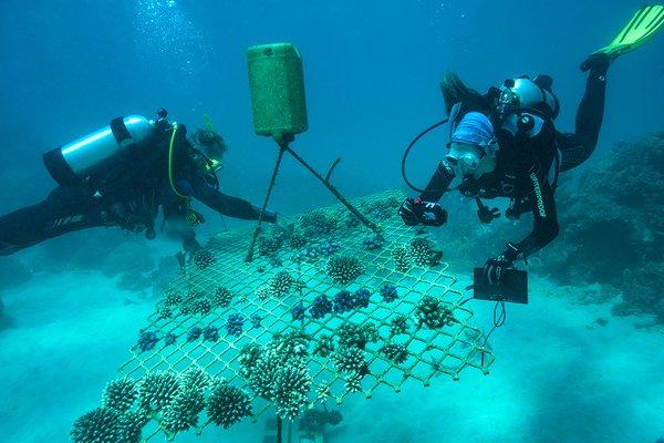 Coral Nurture Program, University of Technology Sydney and Wavelength Reef Cruises