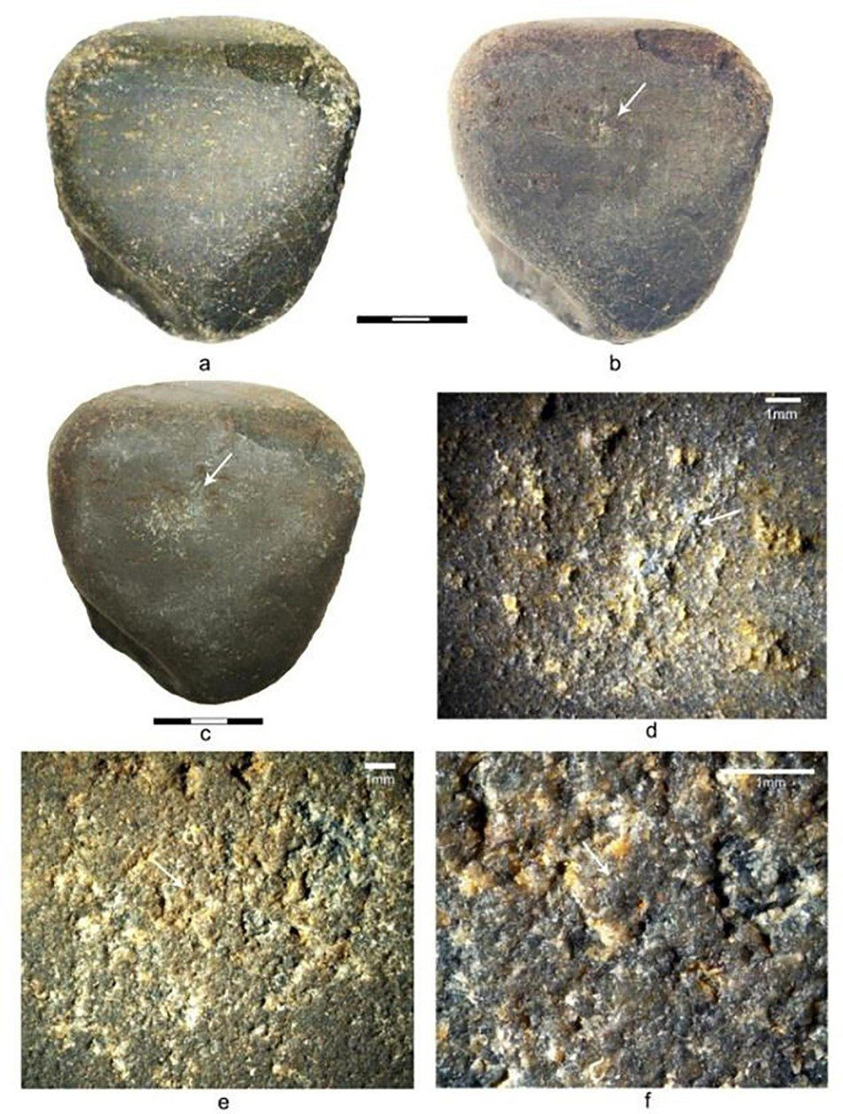 Basalt anvil for cracking Macrozamia seeds and macadamia nuts with arrow where images were taken