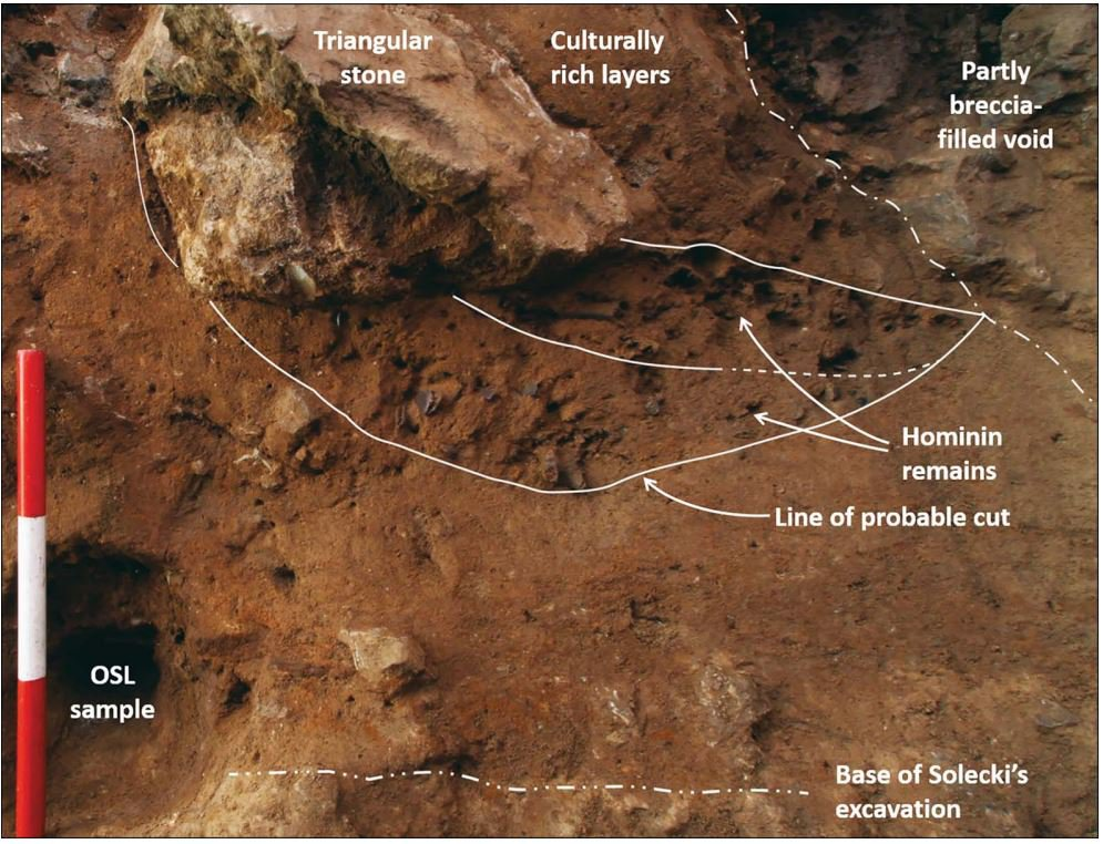 Detail of the new hominin remains in section, looking east; scale 0.3m (photograph by G. Barker), from Pomeroy et al 2020. New Neanderthal remains associated with the 'flower burial' at Shanidar Cave