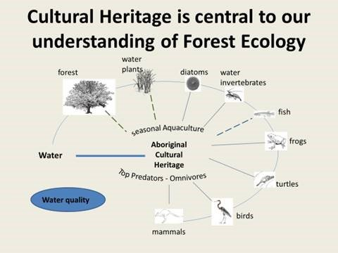 The role of cultural heritage in understanding Forest Ecology. Image by Pardoe and Hutton, with IP rights retained by Barapa Nation.