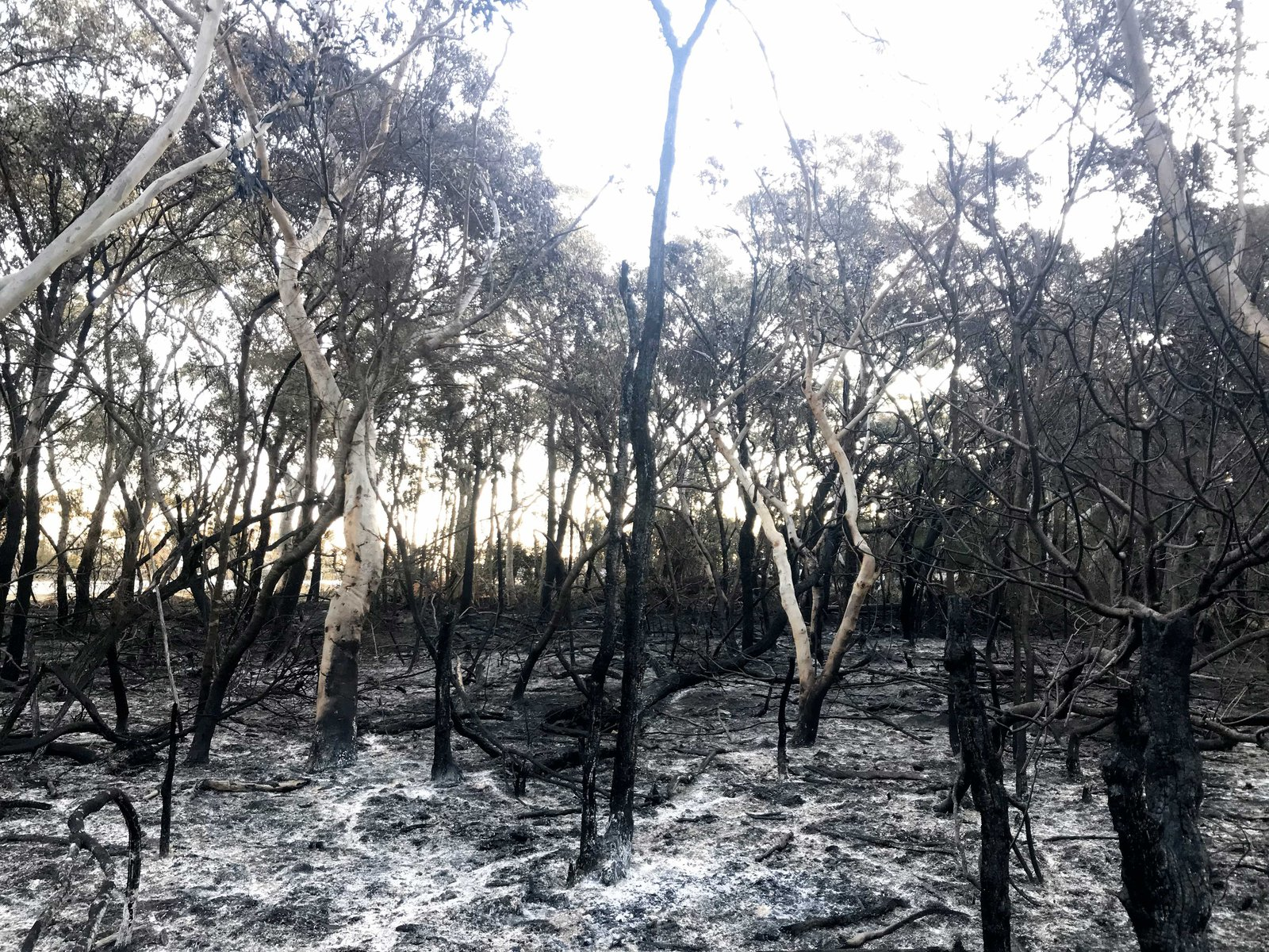 Burnt habitat