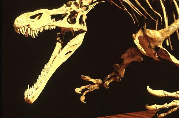 Fossil cast Suchomimus tenerensis