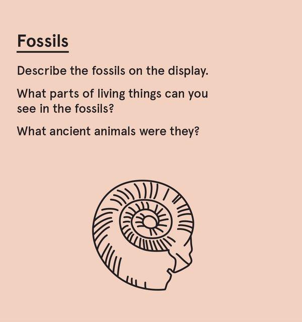 ED_Dino_P - Fossil