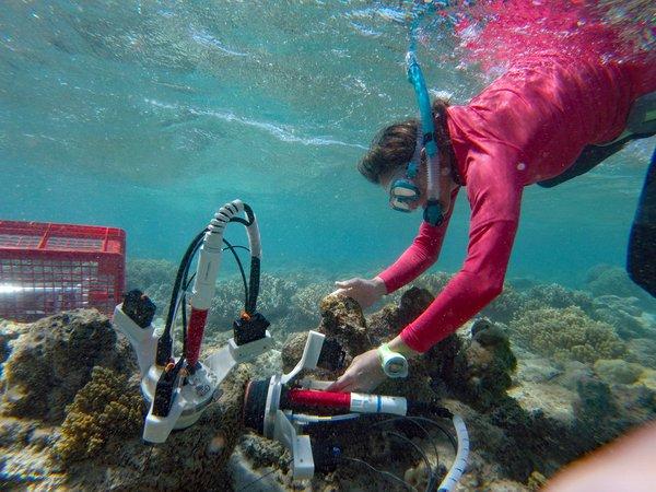 Research at Lizard Island, 2018