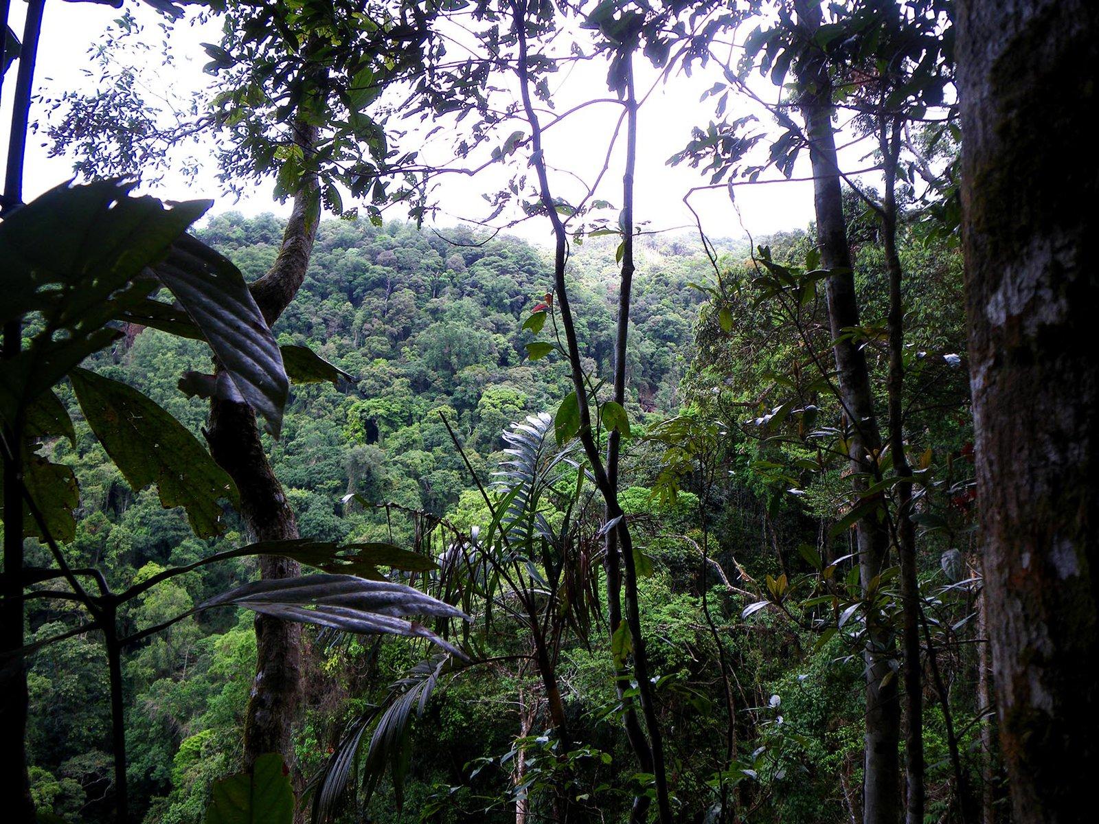 Thorny Tree Frog habitat
