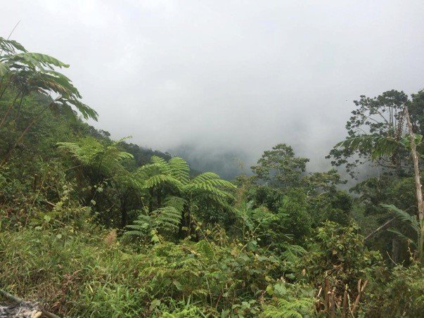 Guadalcanal Rainforest