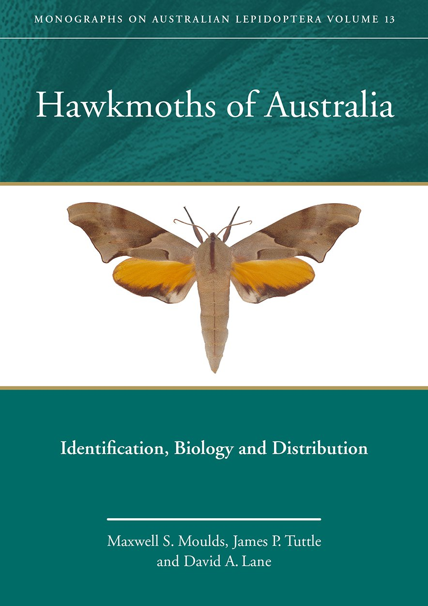 Cover image of Hawkmoths of Australia, Identification, Biology and Distribution. Volume 13 Maxwell Moulds, James Tuttle, David Lane.