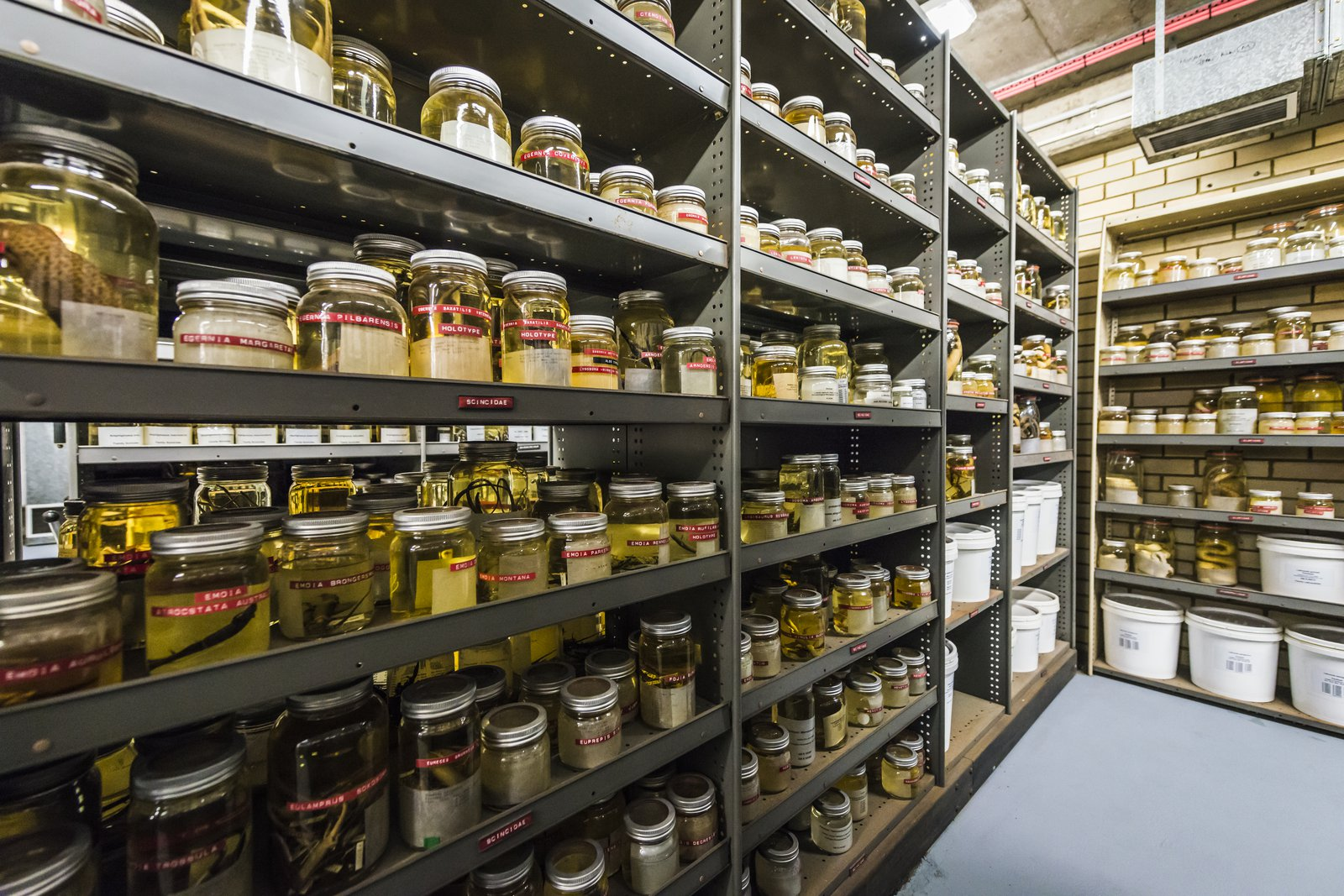 Herpetology Collection Area 2018
