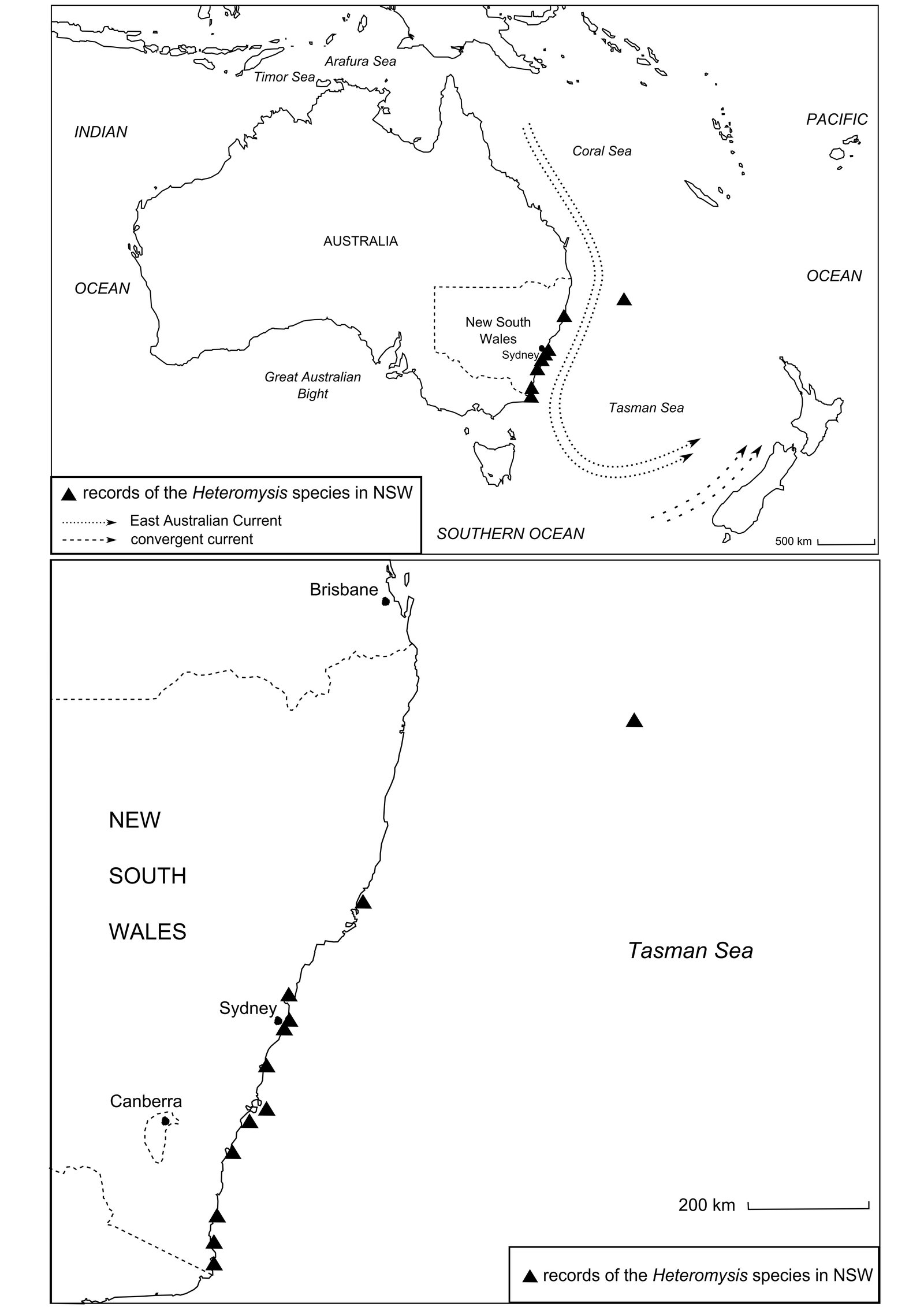 Distribution of Heteromysis species within New South Wales.