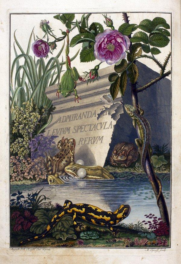 Historia naturalis ranarum nostratium in qua omnes earum proprie