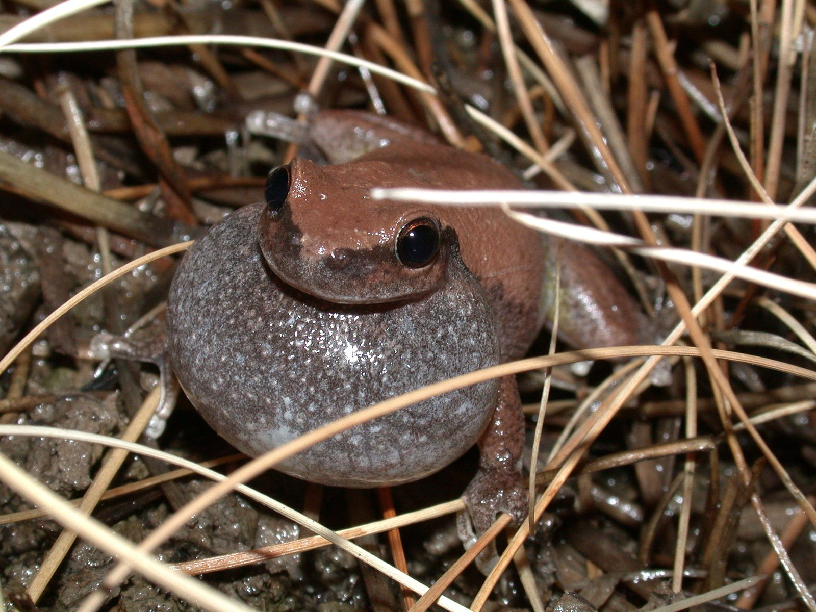 Hitchhiking Frogs - uploaded as part of blog by Tim Cutajar in May 2019
