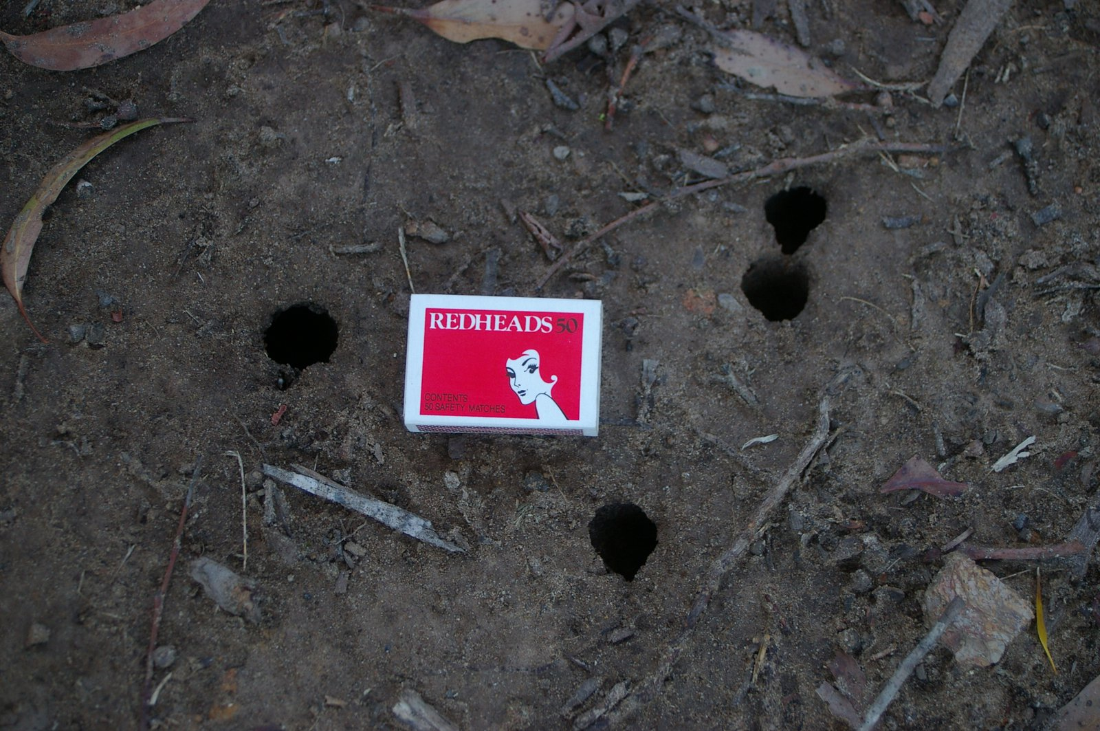 Holes made by Double Drummer cicadas, Thopha saccata, in Wedderburn, NSW.