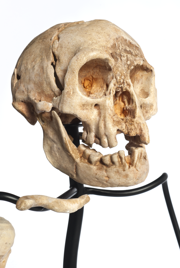 Homo floresiensis on armature