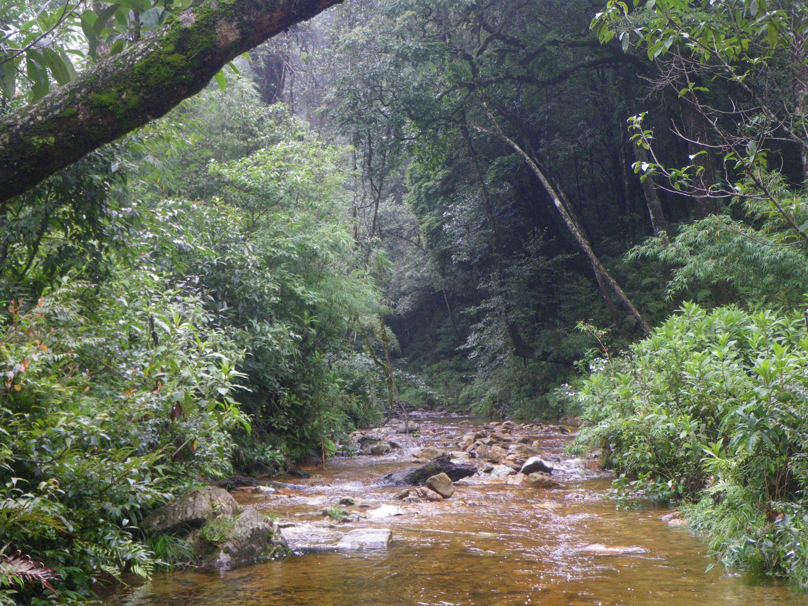 Stream in Hoang Lien National Park, northern Vietnam.