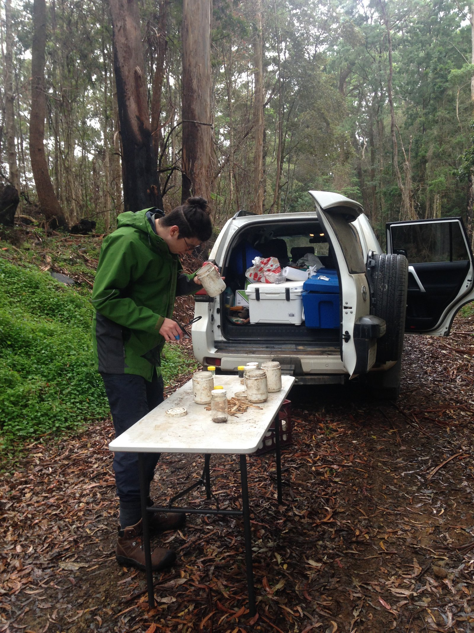 Beetles (Coleoptera) as a target for assessing the impact of 2019/20 wildfires on insects in the NE forests of NSW.