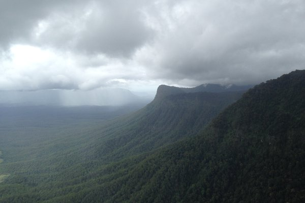 Image of rainforests in Northeast NSW. Photographer: Chris Reid