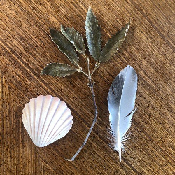 Impression fossil activity – Nature specimens