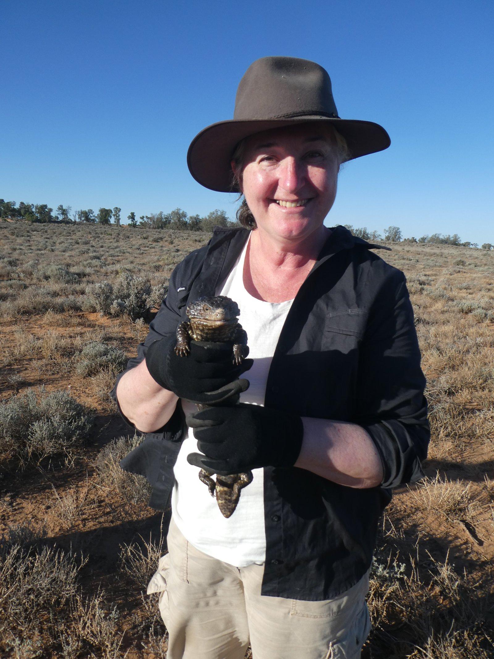 Dr. Barbara Stuart after capturing a wild shingleback lizard (Tiliqua rugosa) prior to volatilome sampling.