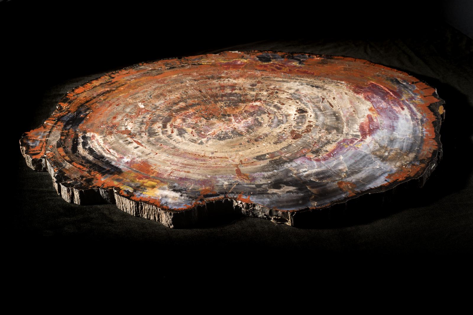 Jasperised wood from the Petrified Forest National Park, Arizona