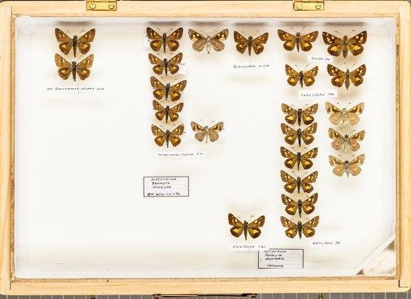 John Landy Butterflies Drawer 16 - 2
