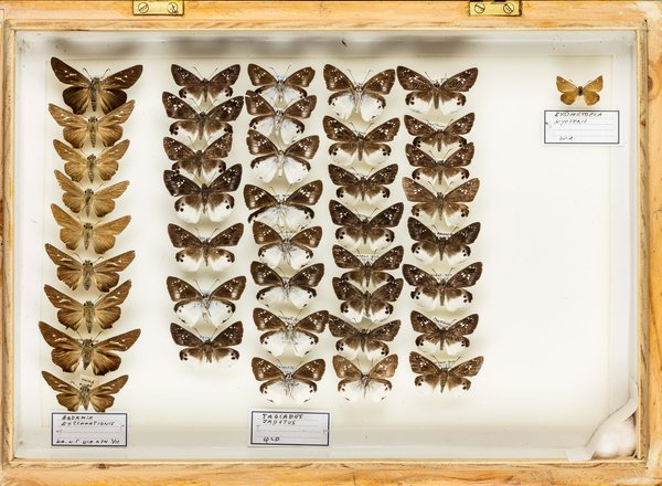 John Landy Butterflies Drawer 1 - 2