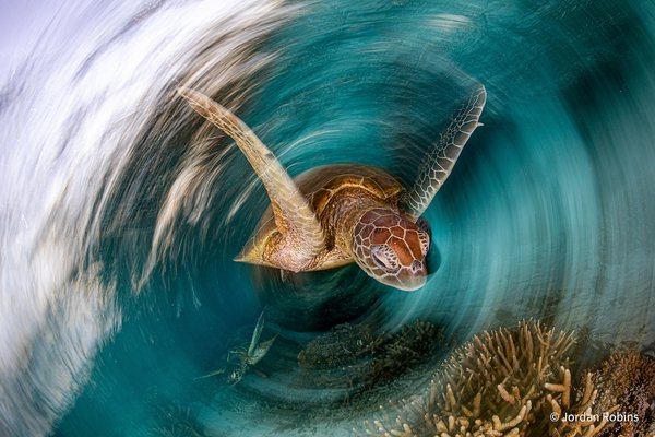 The Turtle Vortex by Jordan Robins, New South Wales