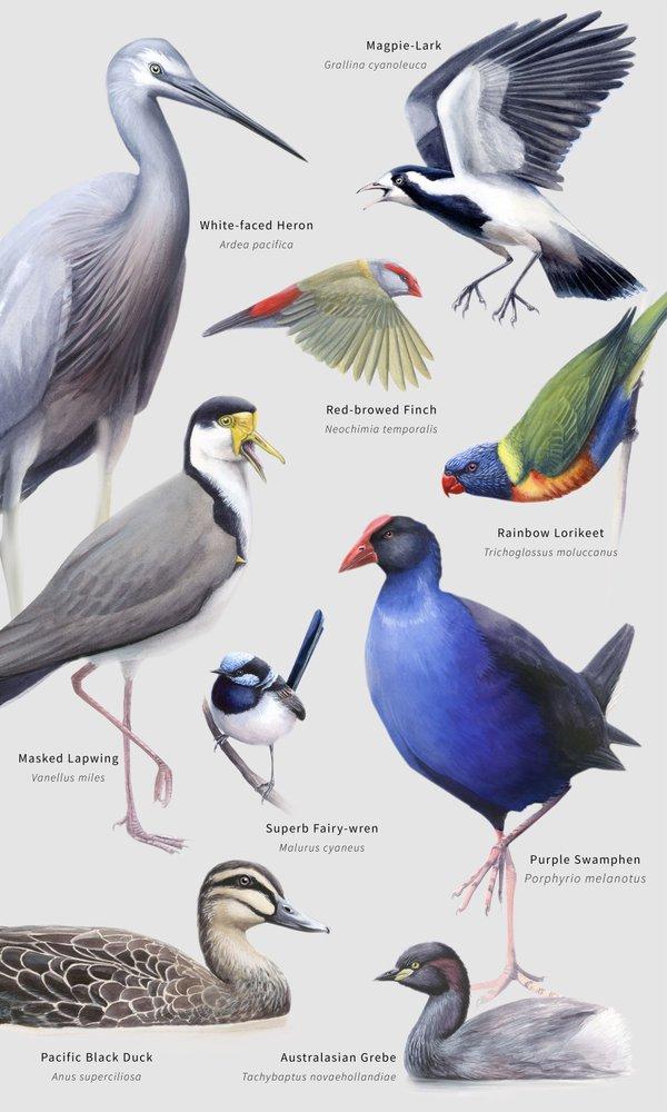 Rachel Klyve - Nine Common Birds