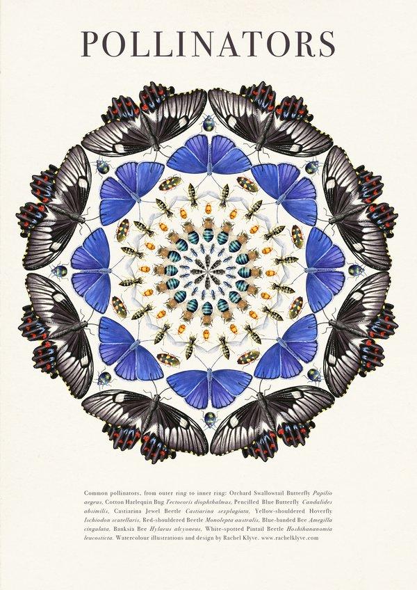 Rachel Klyve - Pollinators