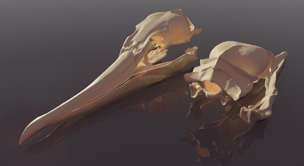Digital 3D Skull – Phalacrocorax carbo, Rachel Klyve