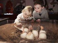 Kids in Dinosaur Gallery