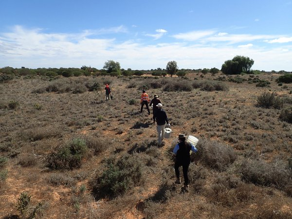 Lake Mungo Bush Blitz